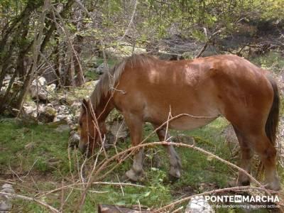 Cascadas del Purgatorio - senderismo Madrid; senderismo madrid singles; viajes de montaña